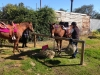 Horse's Birthday 2014